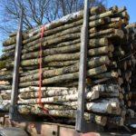 Bußgeldverfahren – Überladung bei Holztransport - Verfallsanordnung