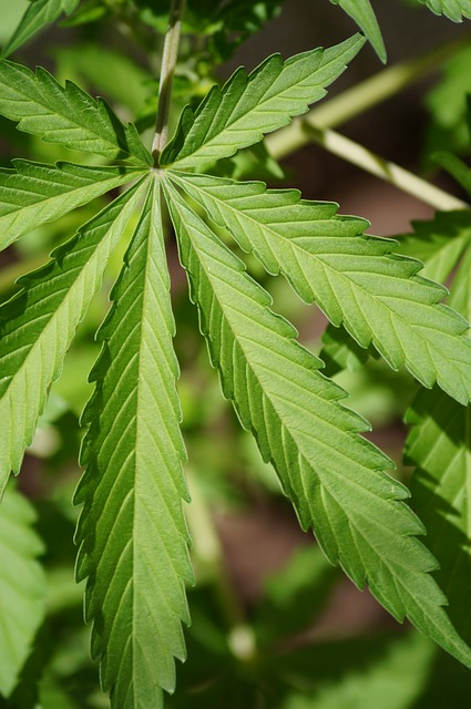 Fahrerlaubnisentziehung - gelegentlicher Cannabiskonsum