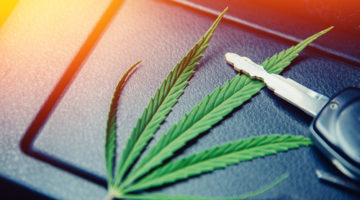 fahrlässigen Führen eines Kraftfahrzeugs im Straßenverkehr unter Einfluss von Cannabis