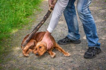Tierquälerei – Bußgeldtatbestand bei Züchtigung eines Hundes bei der Ausbildung